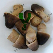 Canned vegetable market prices for mushroom HALAL