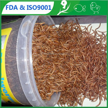 FDA Pet Food (bird,Fish,) 2.5cm Yellow Mealworm parrot food