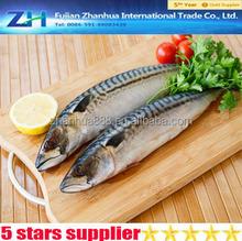 Low price fishing lures mackerel, wholesale fresh mackerel fish, fish maw mackerel