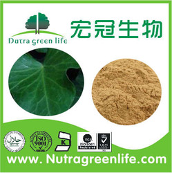 High quality Natural Chinese Ivy leaf Extract 4:1 and 10:1 powder