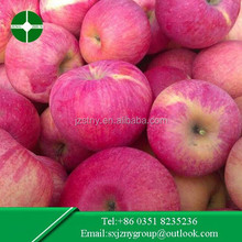Bulk Fresh Apple Supplier in China