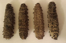Want to sell sea cucumber