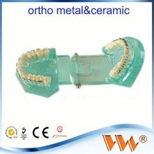 dental training high quality dental care model for dentist teaching guides