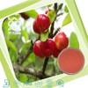 100% Natural Cherry Fruit Powder
