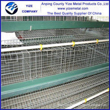 Professional manufacturer hot sales chicken breeding cage for sale hot dipped galvanized with Auto water system