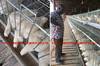 chicken cage poultry equipment for broiler chicken