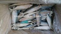 Philippine Products indian mackerel