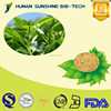 natural herbs Green Green Tea Extract P.E. tea polyphenols EGCG/ Green Tea Extract Powder