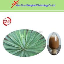 100% pure nature yucca rostrata extract Saponins 10%-60%