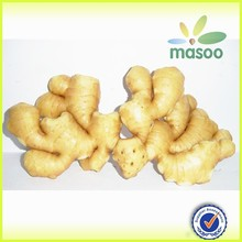 high quality fresh ginger best price