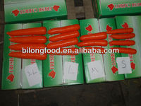 wholesale 2015 new crop Fresh Carrot