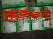wholesale 2015 new crop Fresh Carrot