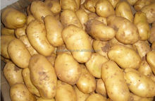 2015 NEW CROP TOP QUALITY POTATOES