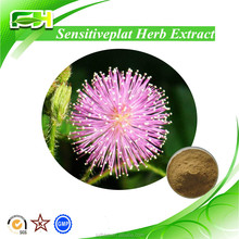 100% Natural Sensitive Plant Extract, Sensitive Plant Extract Powder, Sensitive Plant Extract