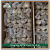 red garlic 4.5-6.5cm fresh garlic for middle east