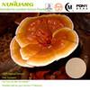 Factory Supply Kosher Halal ISO 9001 Reishi Mushroom Extract,Reishi mushroom Powder