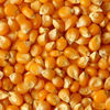 Rich Quality Yellow Corn Animal Feed