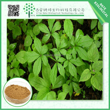 Medicine in china Siberian Ginseng extract/free sample Acanthopanax senticosus powder