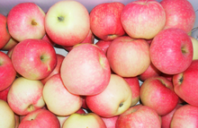 fresh gala apple import from china with comecpetitive price