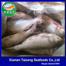 Price Silver carp fish farm raised fish asian carp