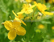 100% Natural 10:1 Greater Celandine Herb Extract