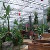 Indoor gardening system metal greenhouse/grow room cabinet grow box mushroom growing house