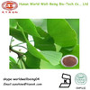 Ginkgo Tree Leaf Extract 24% flavone 6% lactone/ Ginkgo biloba Powder Extract / Ginkgo Powder Extract