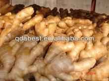 Fresh mature ginger