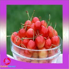 low price canned cherry picker/fresh sour cherries in can