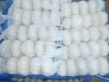 2014 Crop China Shandong Province fresh normal white garlic