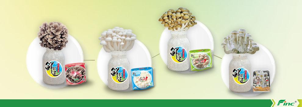 Хатаке shimeji гриб