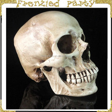 Wholesale party plastic halloween skull head FGHS-0001
