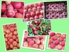 export fresh red delicious apple fruit fresh apple qinguan fresh huaniu apple