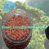 Hot sale copper bullet for the firing of airguns