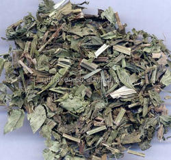 100% Natural 10:1 Lycopus Lucidus Extract