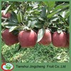 Best Quality Red Mature Huaniu Apple