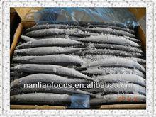 Tamanho em 70 - 90 g congelado sauro