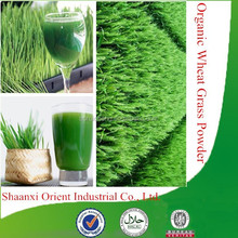 100% Natural & organic wheat grass juice powder with high quality, factory supply organic wheat grass powder
