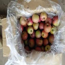Chinese China fresh 100,113,125 red green yummy qinguan apple to india nigeria