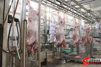 200 cattle and 1000 sheep slaughter line slaughterhouse equipment
