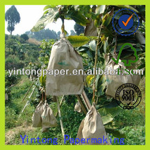 growing paper bag mango bag