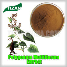 high quality Polygonum Multiflorum Extract with best price