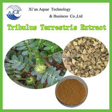 Herb Medicine Plant Extract Of Tribulus Terrestris Extract