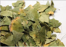 Ginkgo leaf for medicine