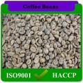 delicioso chino natural para adelgazar café verde
