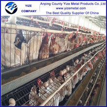 china alibaba Automatic rearing equipment for chicken/used chicken house equipment for layer hens