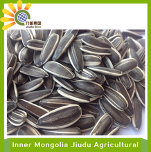 2015CHINESE LARGE SIZE SUNFLOWER SEEDS