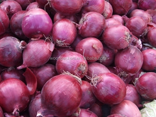 dehydrated onion dry onion