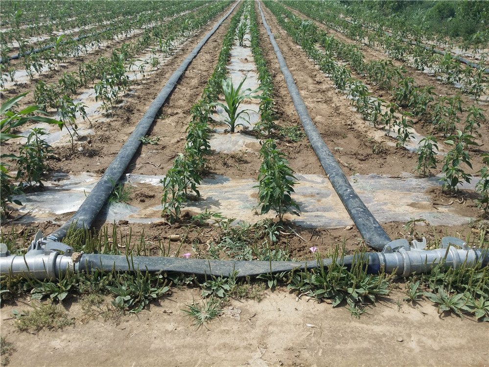 agriculture irrigation Supporting smallholder irrigation through finance and technical assistance could significantly improve productivity and incomes.