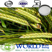 GMP Factory 100% Natural Wheat Grass Seed Extract 98% Hordenine Hordeum Vulgare Extract Barley Malt Extract